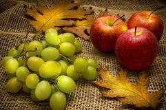 Autumn still-life Royalty Free Stock Photo