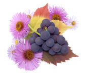 Autumn still-life Royalty Free Stock Images
