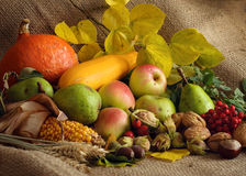 Autumn Still-life. With large group of products like apple, pear, pumpkin, corn, wheat, hazelnut, chestnut and more stock image