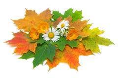 Autumn still life Stock Photography