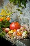 Autumn still life. With halloween pumpkins royalty free stock photos