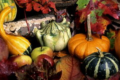 Autumn still life. Of pumpkins,gourds and leaves Stock Photo
