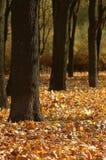 Autumn still-life. Gold balance of an autumn season Royalty Free Stock Photos