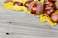 Autumn Still Life Fotos de archivo libres de regalías