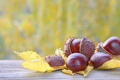 Autumn Still Life Foto de archivo libre de regalías