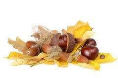 Autumn Still Life Fotografía de archivo