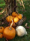 Autumn Still Life. Basket of pumpkins and gourds leaning against a cornstalk Stock Images