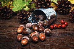 Autumn still life. Acorns in metal bucket and pine cones, oak leaves and hawthorn berries on background selective focus.Seasonal natural decorations on an old stock photos