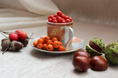 Still-life from autumn fruits of mountain ash, acorns, hawthorn and horse chestnut. Stock Photos