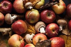 Autumn still-life Stock Photos