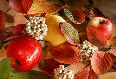Autumn still life with apples Stock Images