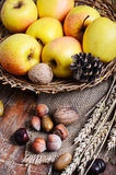 Autumn still life with apples and nuts Stock Image