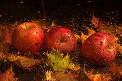 Autumn still life with apples Stock Photos