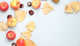 Autumn still life. Top view. Apples, pears, fallen leaves, chestnuts on a gray background. Copy space stock photography