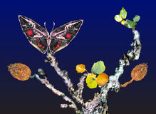 Autumn still life with black butterfly and tree wi Stock Photo