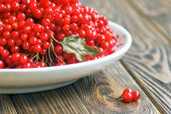 Autumn still life with bunches of viburnum. Fresh juicy ripe viburnum berries in a white plate on wooden background. Selective foc Stock Photos