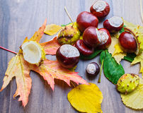 Autumn still life, chestnuts close up Stock Image