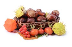 Autumn still-life - chestnuts and a mountain ash Stock Photo