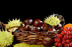 Autumn still-life - chestnuts and a mountain ash Royalty Free Stock Image