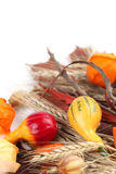 Autumn still life with colorful pumpkins Stock Photography