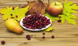 Autumn Still Life. Cranberries on a white plate, autumn leaves a Stock Images