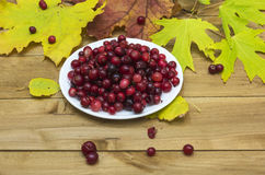 Autumn Still Life. Cranberries on a white plate Royalty Free Stock Photos