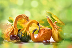 Autumn still life with decorative gourds Royalty Free Stock Photography