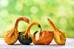 Autumn still life with decorative gourds Stock Photography