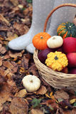 Autumn still life with different pumpkins Stock Photos