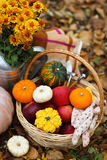 Autumn still life with different pumpkins Royalty Free Stock Photo