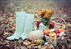 Autumn still life with different pumpkins Royalty Free Stock Photos