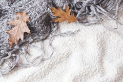 Autumn still life. Dry oak leaves on a warm soft blanket. Top view, vintage style. Copy space.  royalty free stock photo