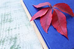 Autumn still life. Fall leaves and old book Stock Photos