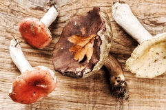 Autumn still life with forest mushrooms royalty free stock images