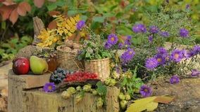 Autumn Still Life Of Fruit e fiori stock footage