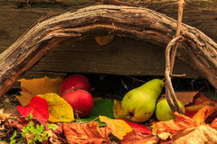 Autumn still life with fruit in leaves on board and vines backgr Stock Photography