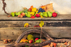 Autumn still life with fruit in leaves on board and vines backgr Royalty Free Stock Photo