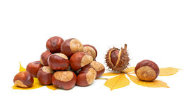 Autumn still life - fruit and leaves of chestnut. Royalty Free Stock Photo
