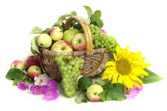 Autumn still life with fruits, berries and flowers on white background stock photography
