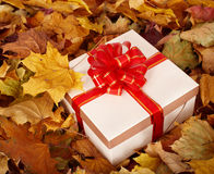 Autumn still life with  gift box. Royalty Free Stock Image