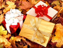 Autumn still life with group gift box. Stock Image