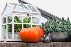 Autumn still life with harvested pumpkin and hotbed Royalty Free Stock Image