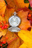Autumn still life, hours on maple leaves, nearby a bright mountain ash Stock Images