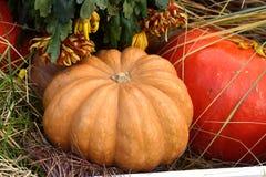 Autumn still life. Huge pumpkins and chrysanthemums Royalty Free Stock Image