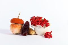 Autumn Still Life-Kürbismais Viburnum lokalisiert auf einer Weißrückseite Stockbild