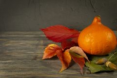 Autumn still life with leaves, pumpkin and acorn royalty free stock photography