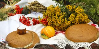 Autumn still life - loaf, pumpkin, mountain ash, tansy, wheat ears, salt,on a white tablecloth with lace Stock Image