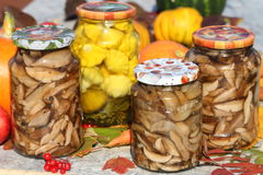 Autumn still life. Marinated hats of birch mushrooms and bush pumpkins in glass jars Royalty Free Stock Images