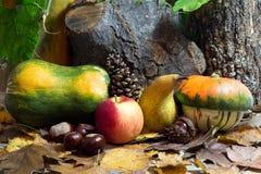 Autumn Still Life med kalebasser, Apple, päronet, kastanjer, Pinecone och sidor Arkivfoton
