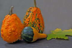 Autumn still life with mini pumpkins Royalty Free Stock Photos